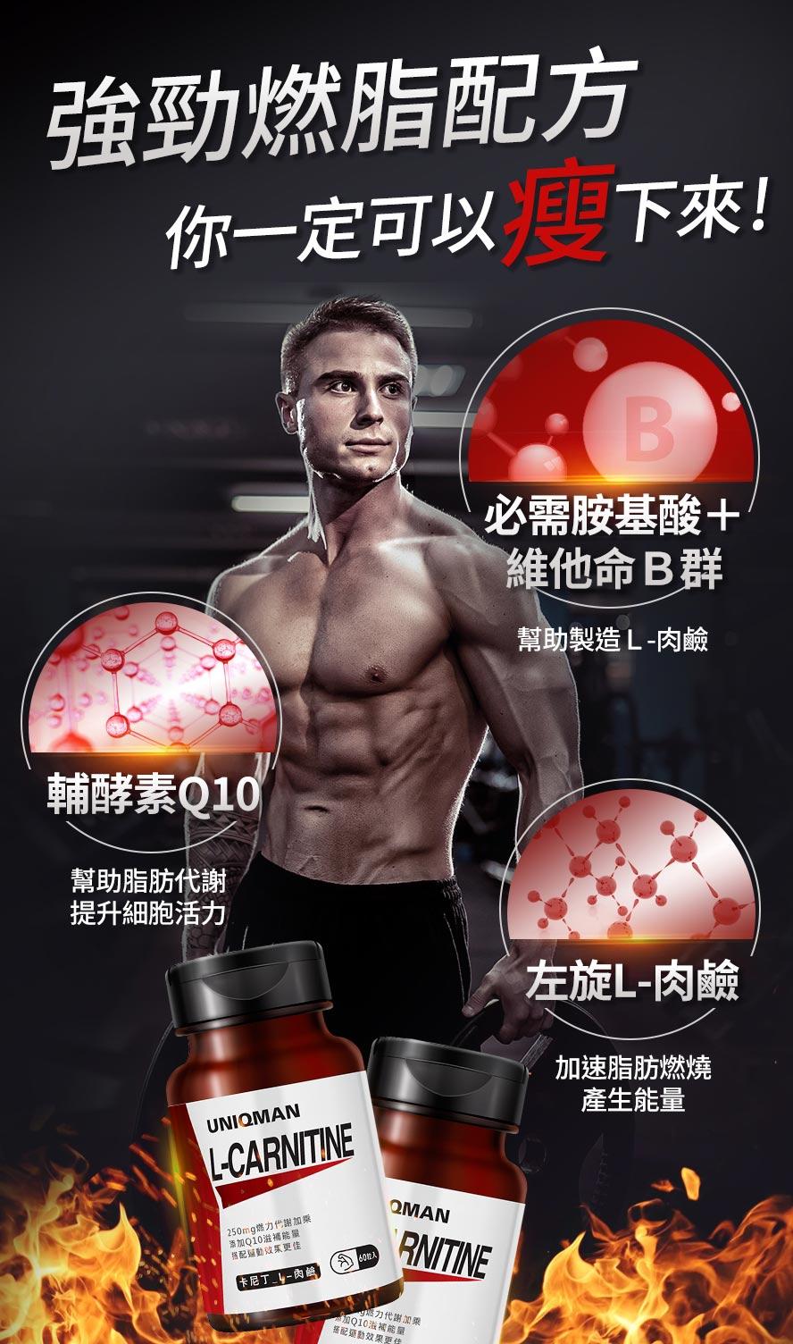 左旋肉鹼又稱脂肪的搬運工,主要運送脂肪至細胞內燃燒,轉化成能量
